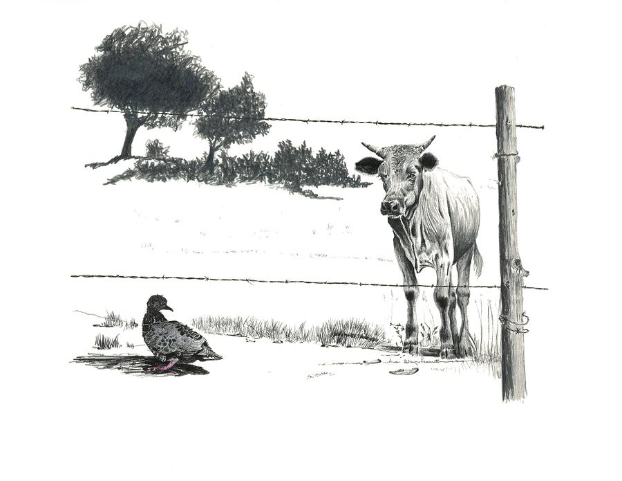 farm fence drawing. Cows Drawing - Dont Fence Me In By Wayne Feamster Farm