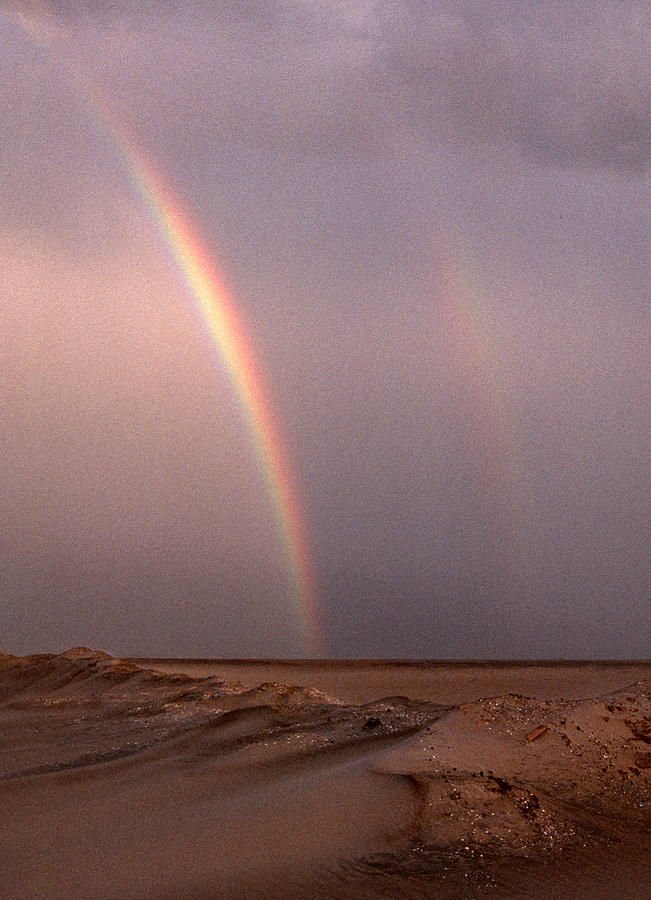 Beach Photograph - Double by Skip Willits