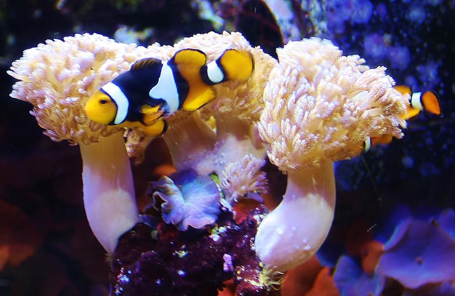 Coral Photograph - Down Under by Bruce Bley