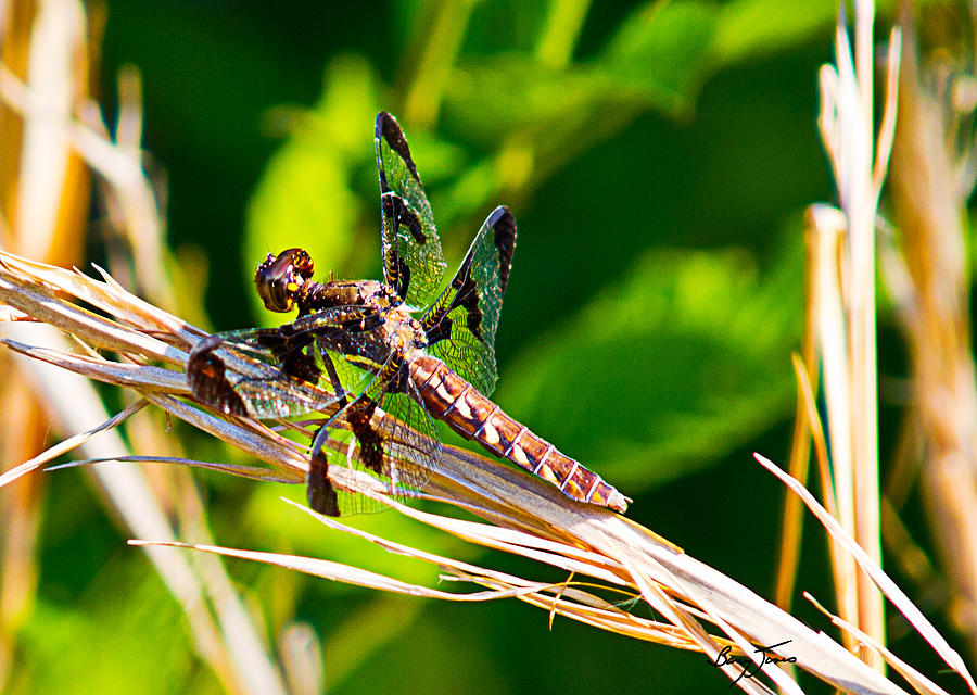 Bug Photograph - Dragon On The Prowl by Barry Jones