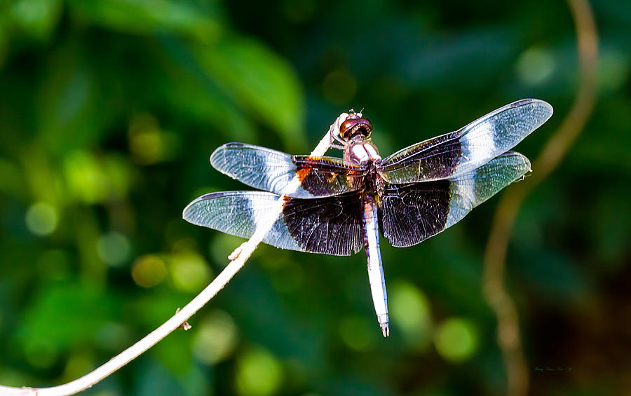 Dragonfly Photograph - Dragonfly 0002 by Barry Jones