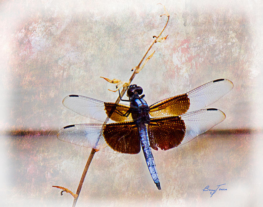 Dragonfly Photograph - Dragonfly Clinging by Barry Jones