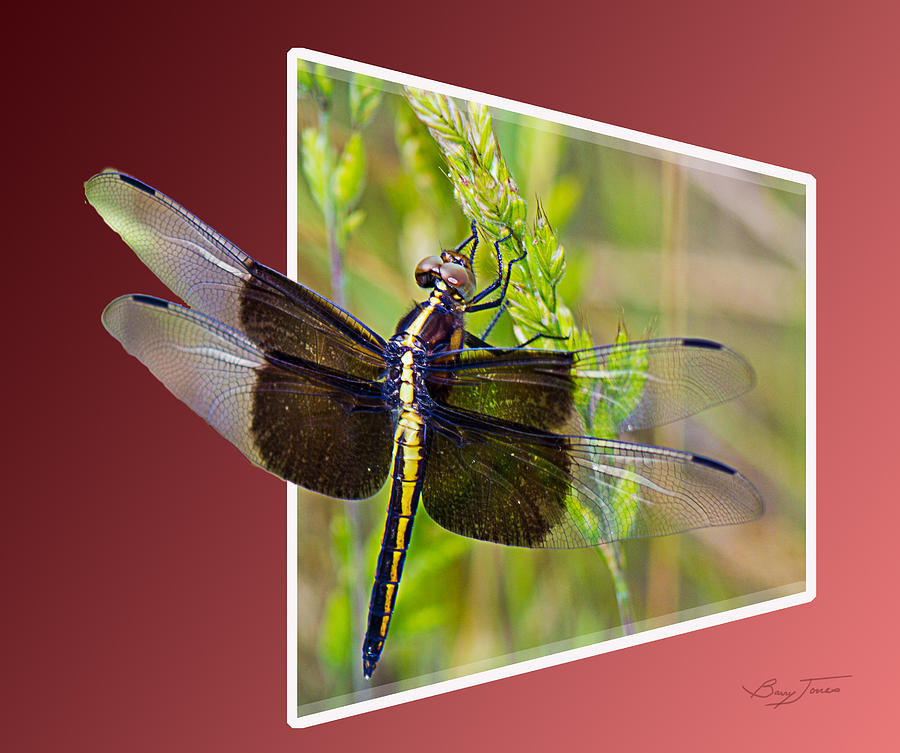 Dragonfly Photograph - Dragonfly Holding On by Barry Jones