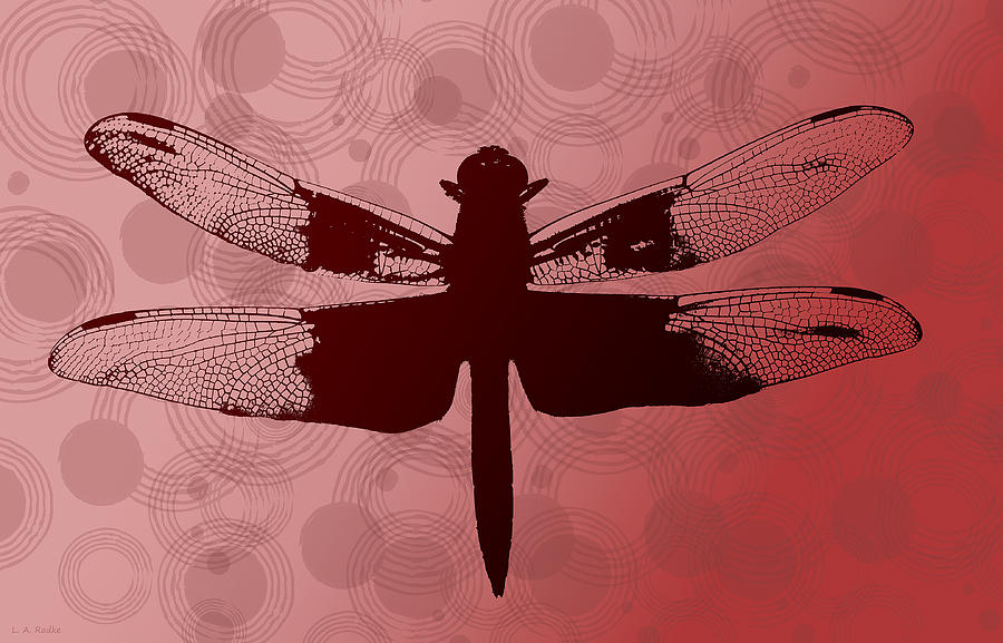 Dragonfly by Lauren Radke