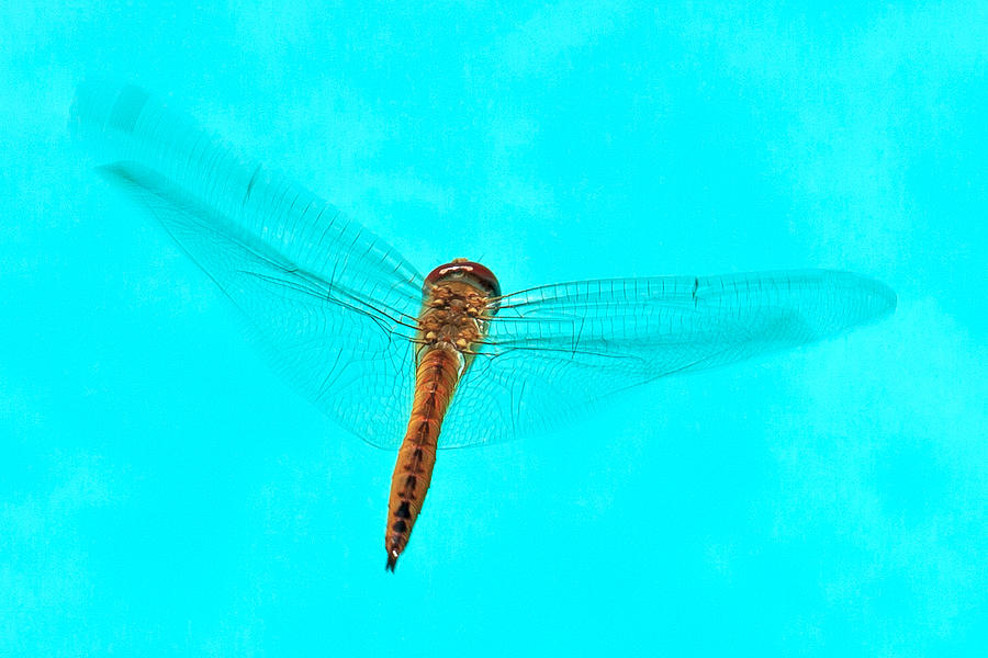 Dragonfly Photograph - Dragonfly by Miguel Capelo