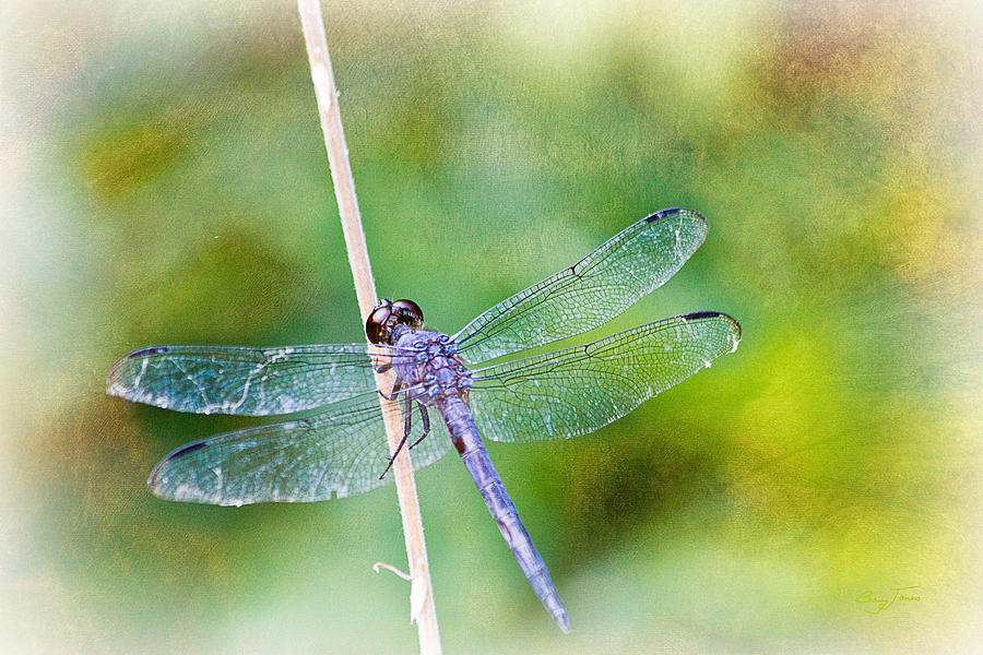 Dragonfly Photograph - Dragonfly Respite 001 by Barry Jones
