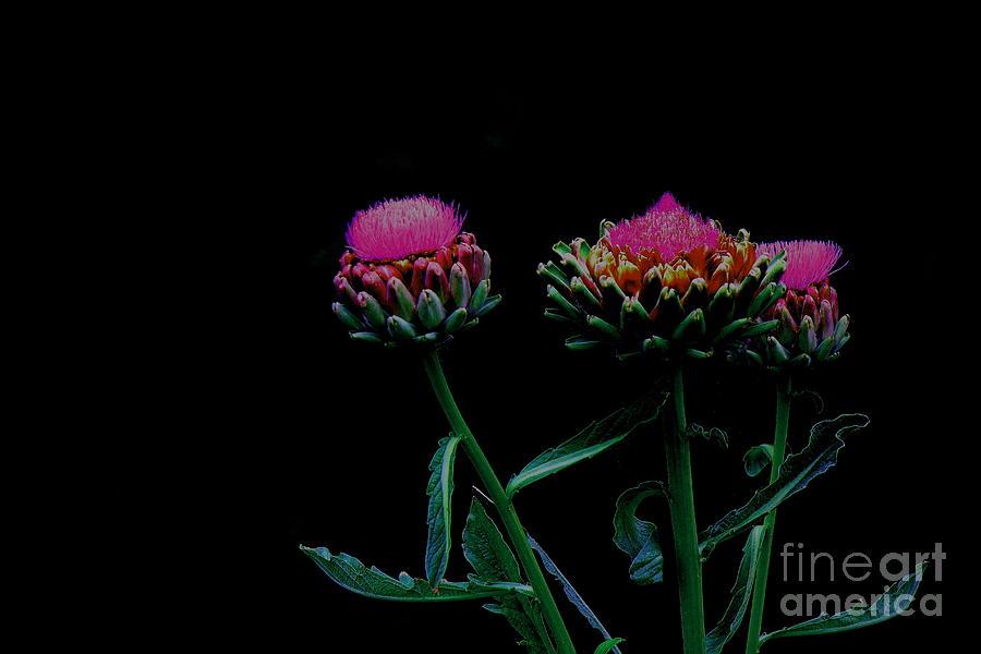 Flowers In Black Photograph - Draped In Darkness by Allen Sindlinger