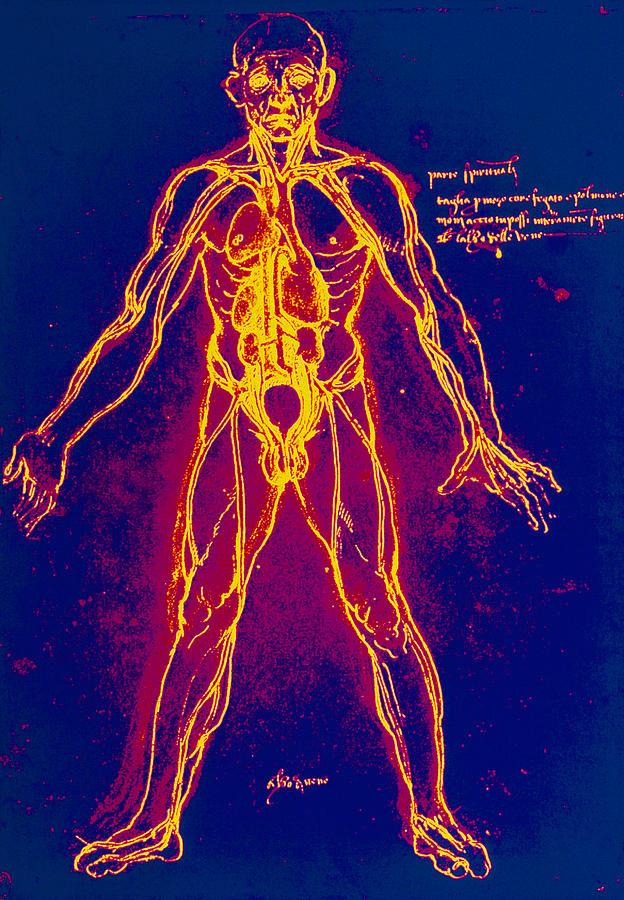 Artwork Photograph - Drawing Of Human Venous System (leonardo Da Vinci) by Mehau Kulyk