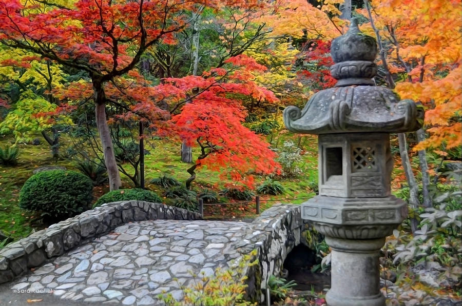 Japanese Garden Photograph - Dream Beautifully by Sarai Rachel
