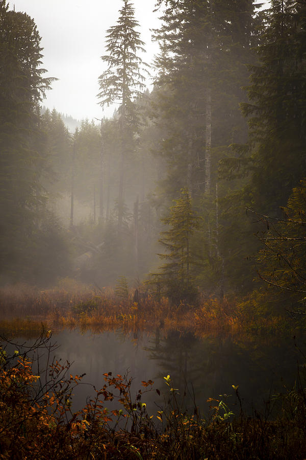 Fall Photograph - Dream Of Autumn by Mike Reid