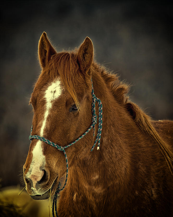 Horse Photograph - Dream On by Gary Smith