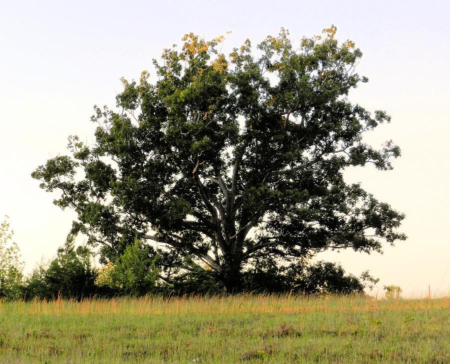 Landscape Photograph - Dream Tree by Jennifer Stockman