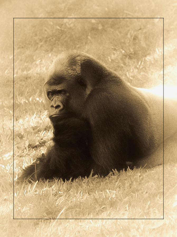 Gorilla Photograph - Dreaming Of Home by DigiArt Diaries by Vicky B Fuller