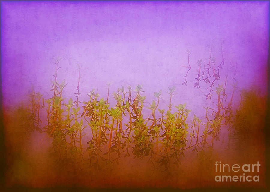 Pond Photograph - Dreams At Daybreak by Judi Bagwell
