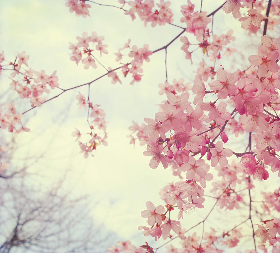 Spring Photograph - Dreams In Pink by Kristy Campbell
