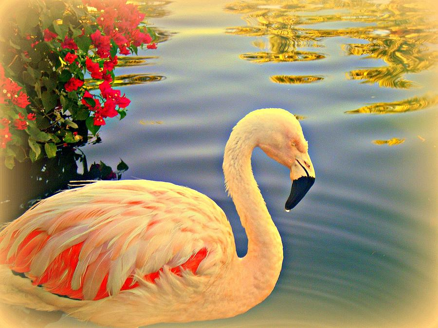 Flamingos Photograph - Dreamy Flamingo by Kevin Moore