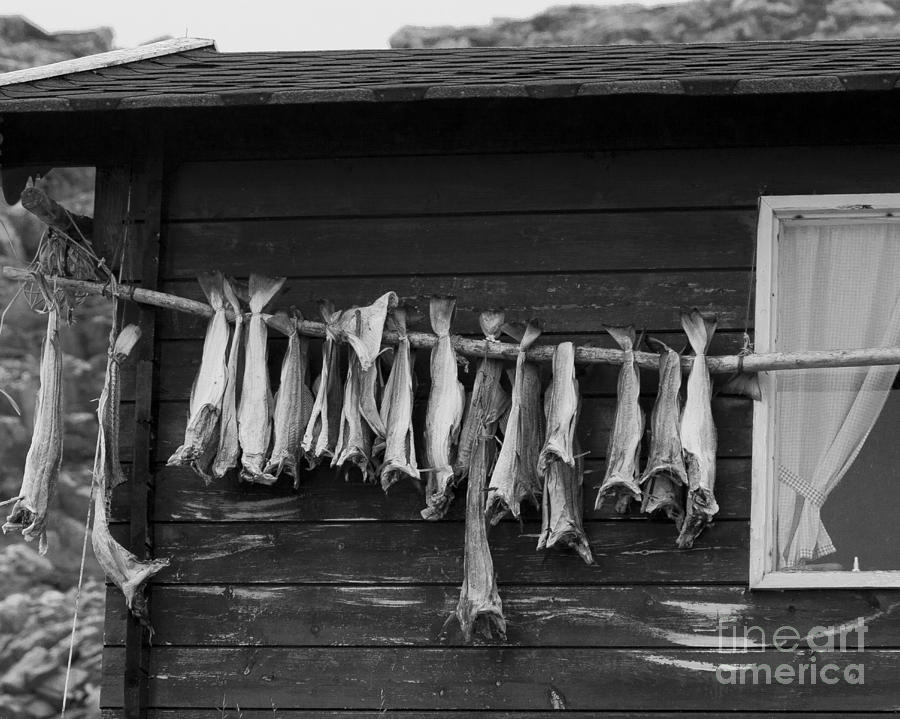 Fish Photograph - Dried Cod On A Line by Heiko Koehrer-Wagner