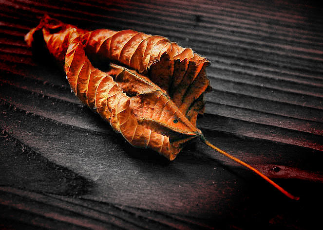 Photographers Photograph - Dried Leaf by Petr Nikl