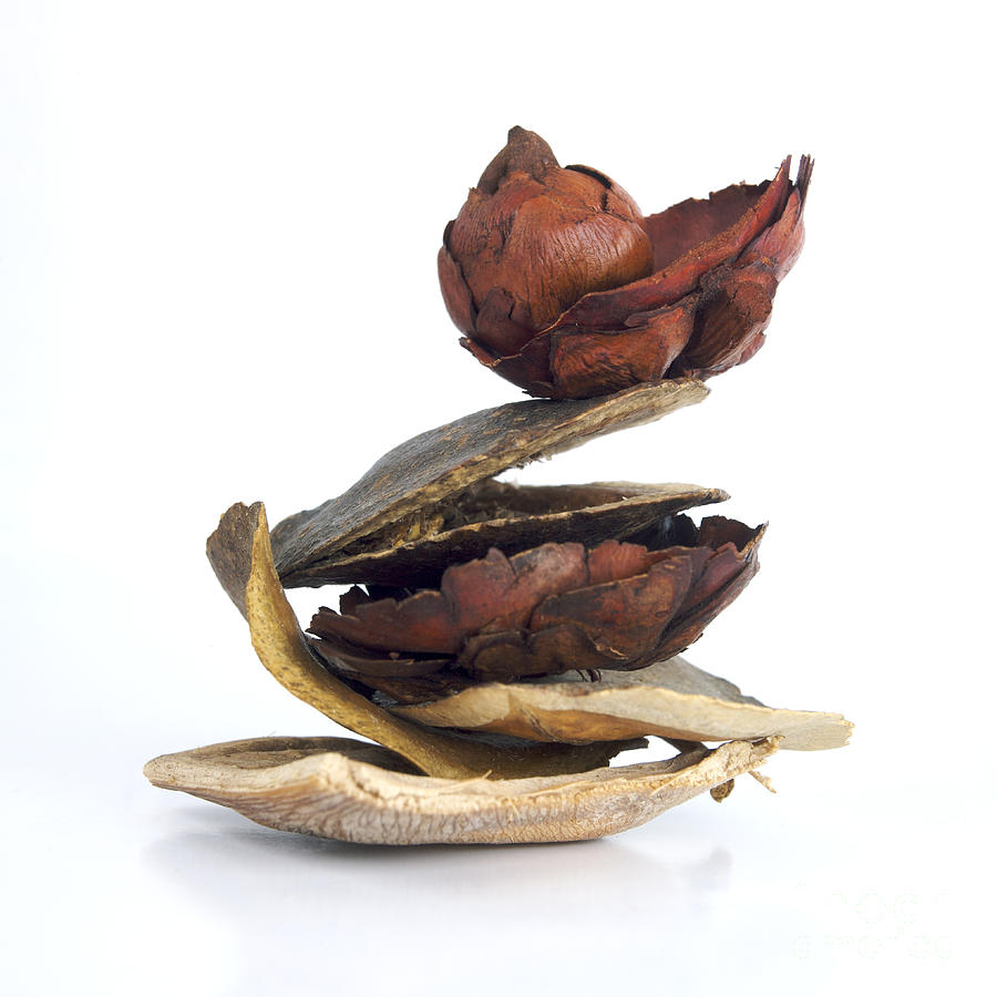 Vegetarian Photograph - Dried Pieces Of Vegetables by Bernard Jaubert