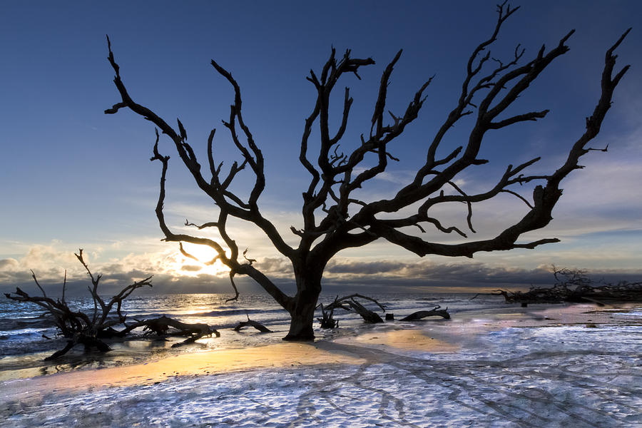 Clouds Photograph - Driftwood Beach At Dawn by Debra and Dave Vanderlaan