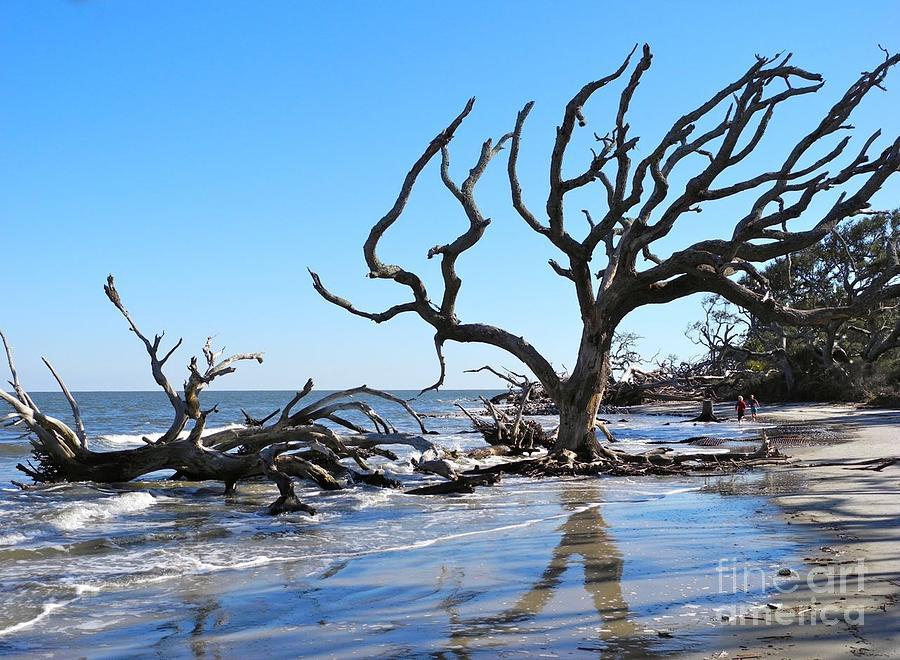 Driftwood Beach Jekyll Island Ga Photograph By Pauline Margarone