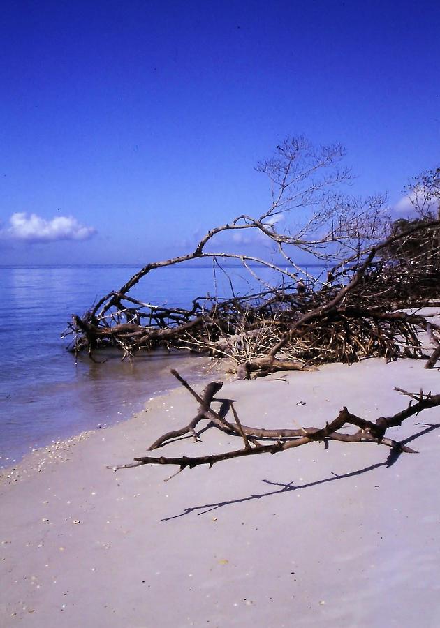 Beach Photograph - Driftwood Beach by Rosalie Scanlon