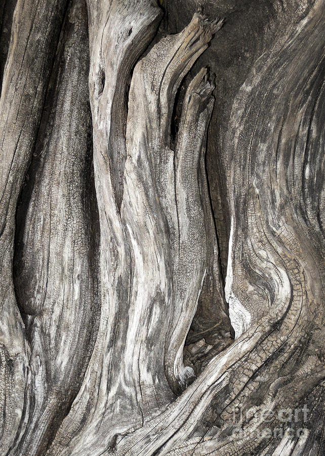 Abstract Photograph - Driftwood Design 53 by Larry Lawhead