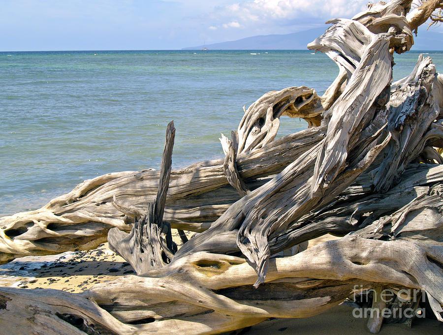 Driftwood II by Patricia Griffin Brett