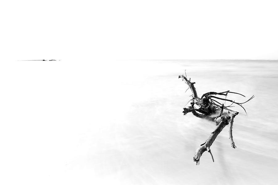 Black And White Photograph - Driftwood In Hi-key by Edward Kreis