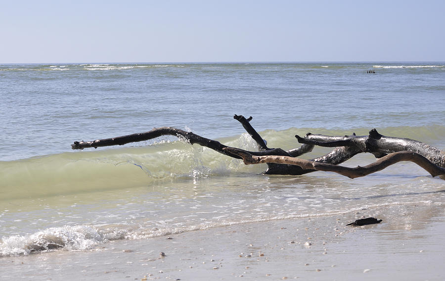 Driftwood Photograph - Driftwood In The Surf by Christine Stonebridge