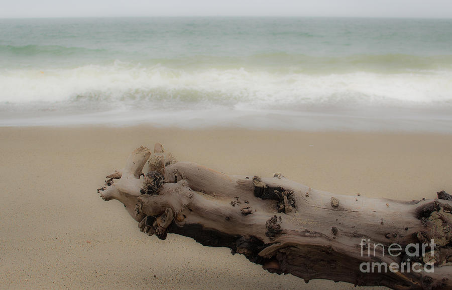 Driftwood Photograph - Driftwood by Patty Descalzi