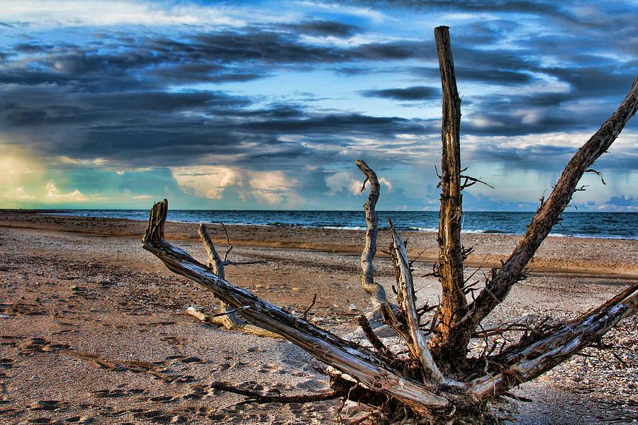 Driftwood Photograph - Driftwood V2 by Douglas Barnard