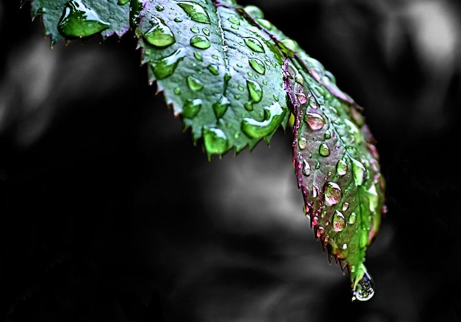 Wet Photograph - Dripping Wet by Karen Scovill