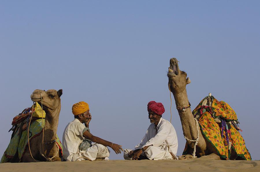 Mp Photograph - Dromedary Camelus Dromedaries Pair by Pete Oxford