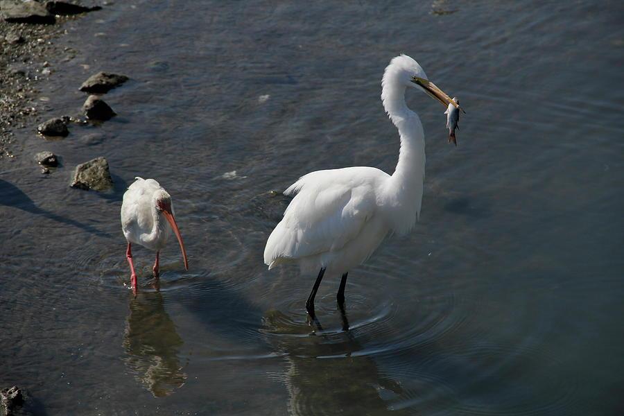 Bird Photograph - Drop It Please by Jackie Briggs