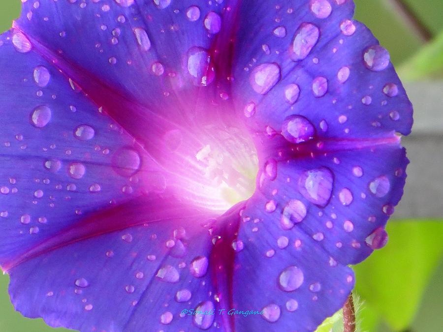 Glory Photograph - Droplets Glory by Sonali Gangane