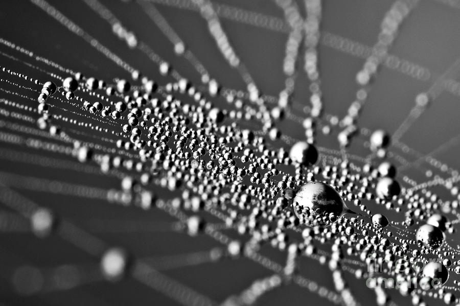 Background Photograph - Drops In Spiderweb by Odon Czintos