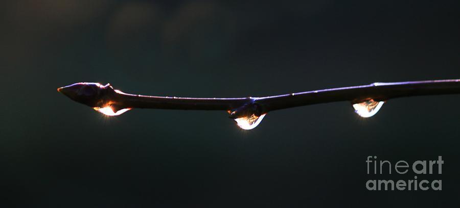 Sunrise Photograph - Drops Of Sunrise by Erica Hanel