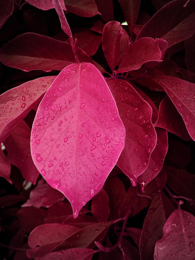 Leaf Digital Art - Drops On Red by Nafets Nuarb