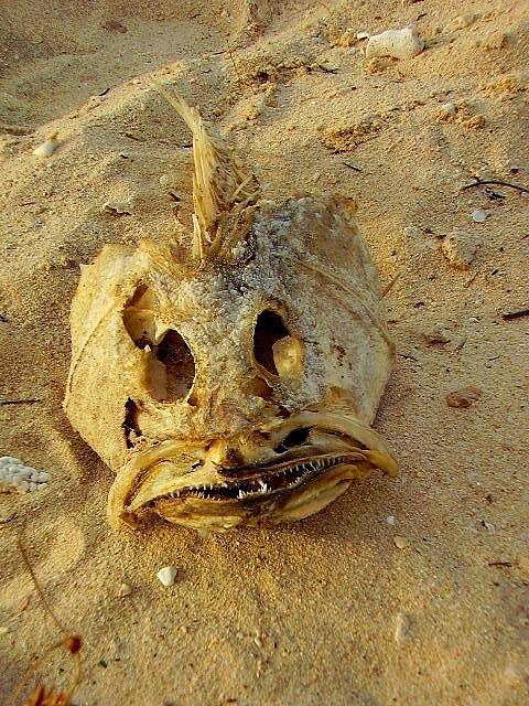 Dry Photograph - Dry Fish by Jenny Senra Pampin