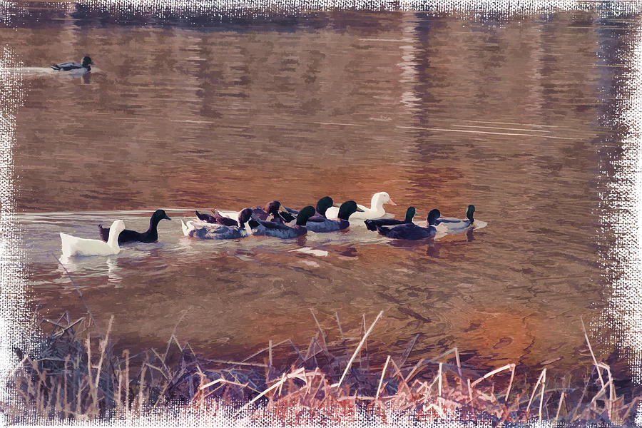 Reeds Photograph - Ducks On Canvas by Douglas Barnard