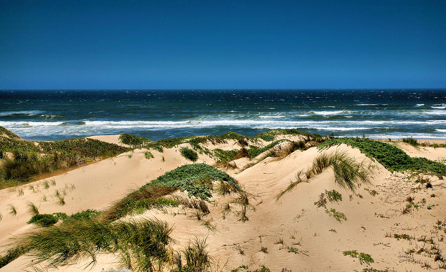 Dune Photograph - Dunes And The Pacific by Steven Ainsworth