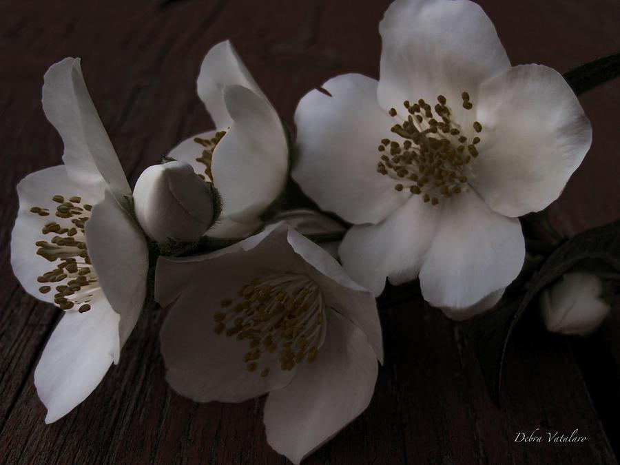 Floral Design Photograph - Dusk Blooms by Debra     Vatalaro