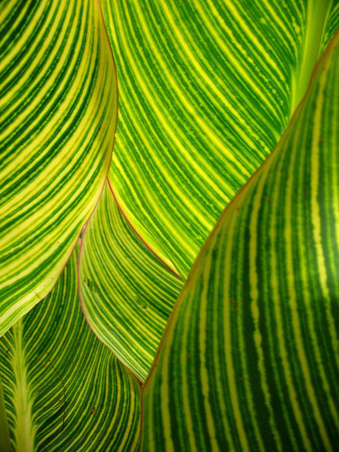 Vertical Photograph - Dwarf Canna Lily by Brenda Foran