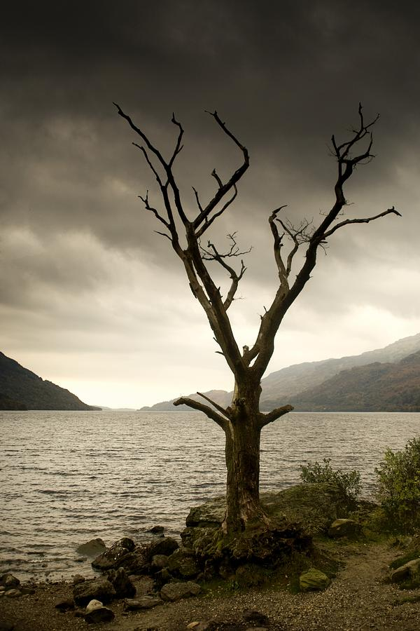 Dying Tree On Shoreline Loch Lomand Photograph By John Short