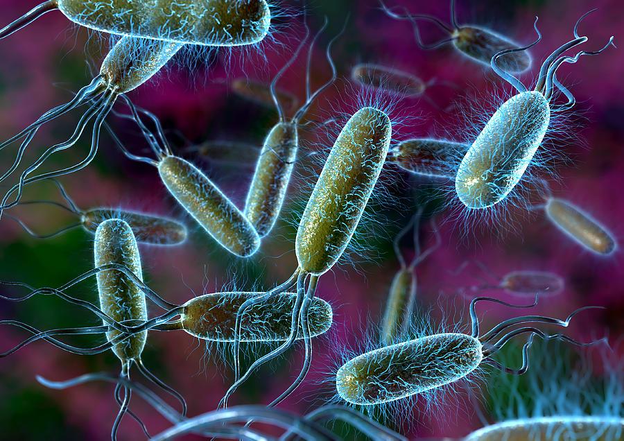 Escherichia Coli Photograph - E. Coli Bacteria by David Mack