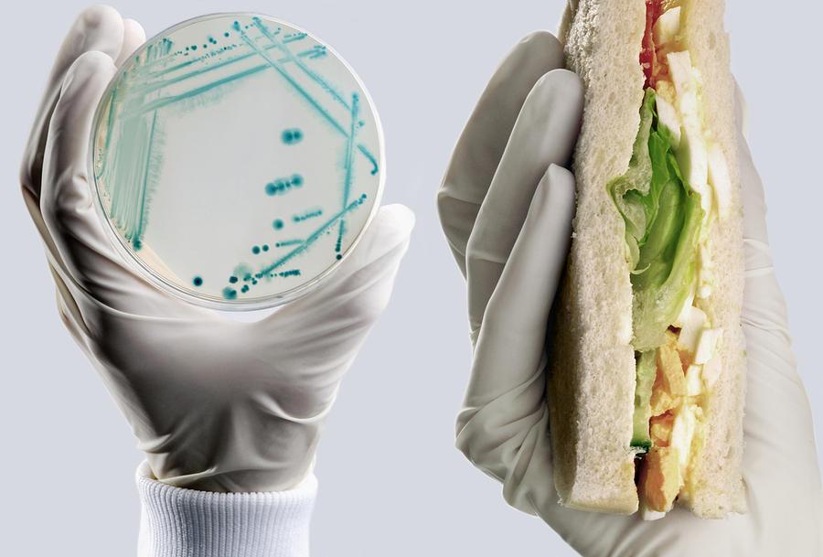 Картинки пищевых токсикоинфекций