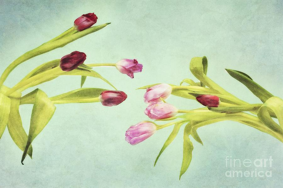 Art Photograph - Eager For Spring by Priska Wettstein
