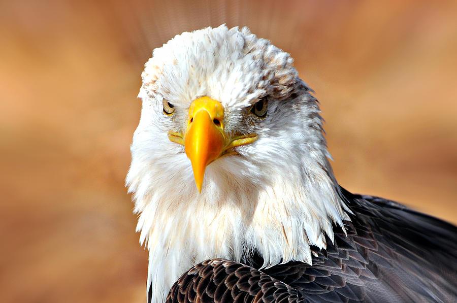 Eagle Photograph - Eagle 21 by Marty Koch