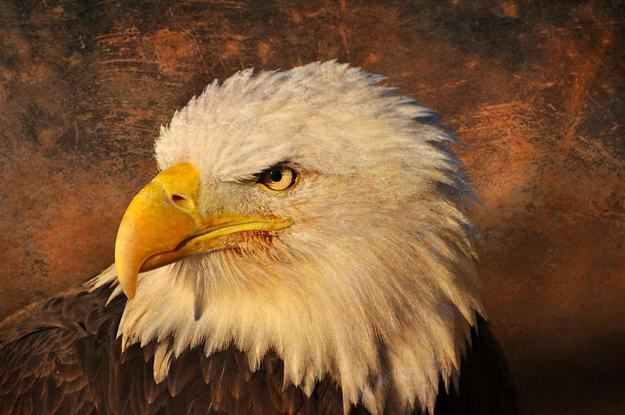 Eagle Photograph - Eagle 47 by Marty Koch